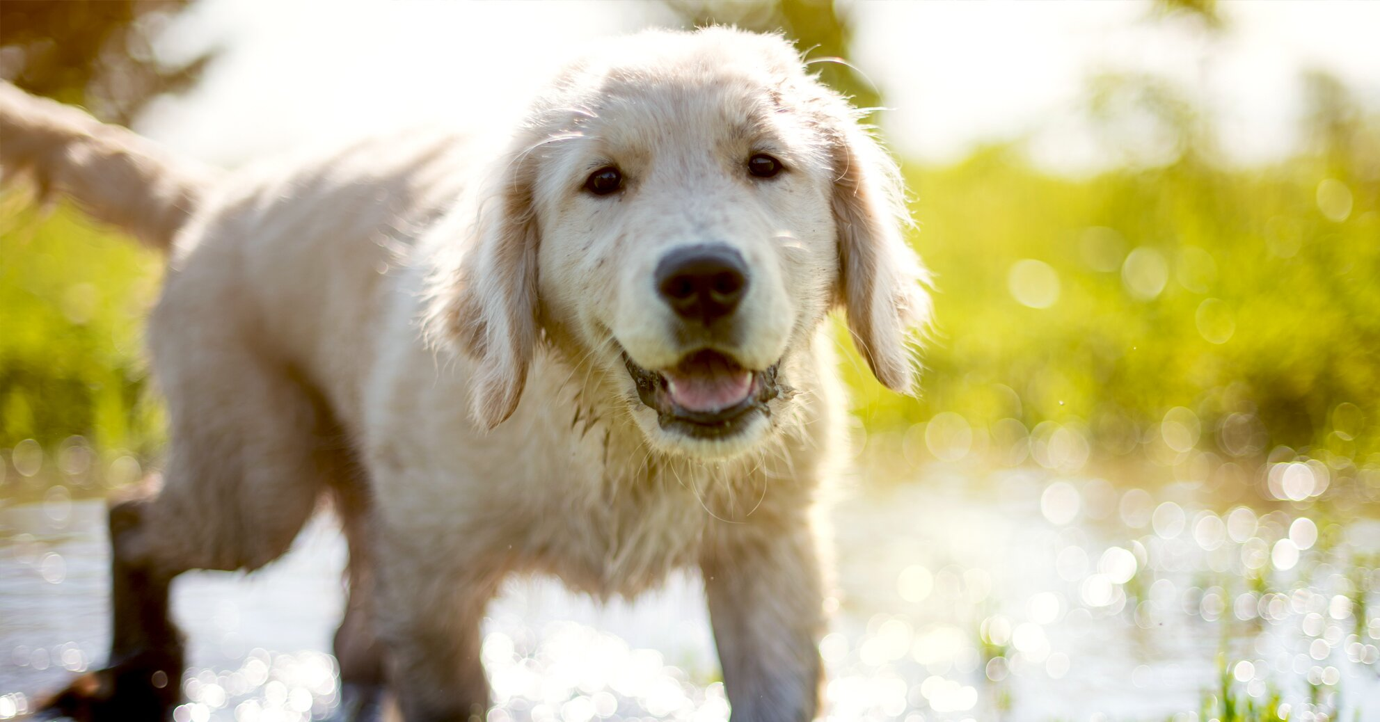 Adolescent Dogs Act Similarly to Teenage Humans, New Study Suggests