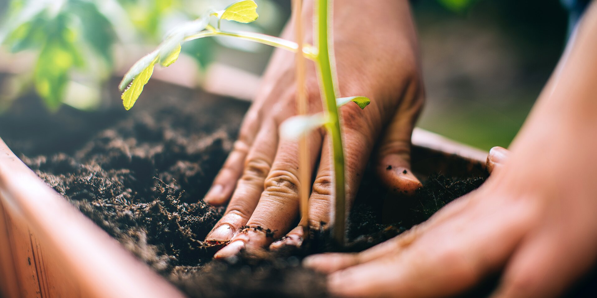 The Best Way to Harden Off Plants for Transplanting