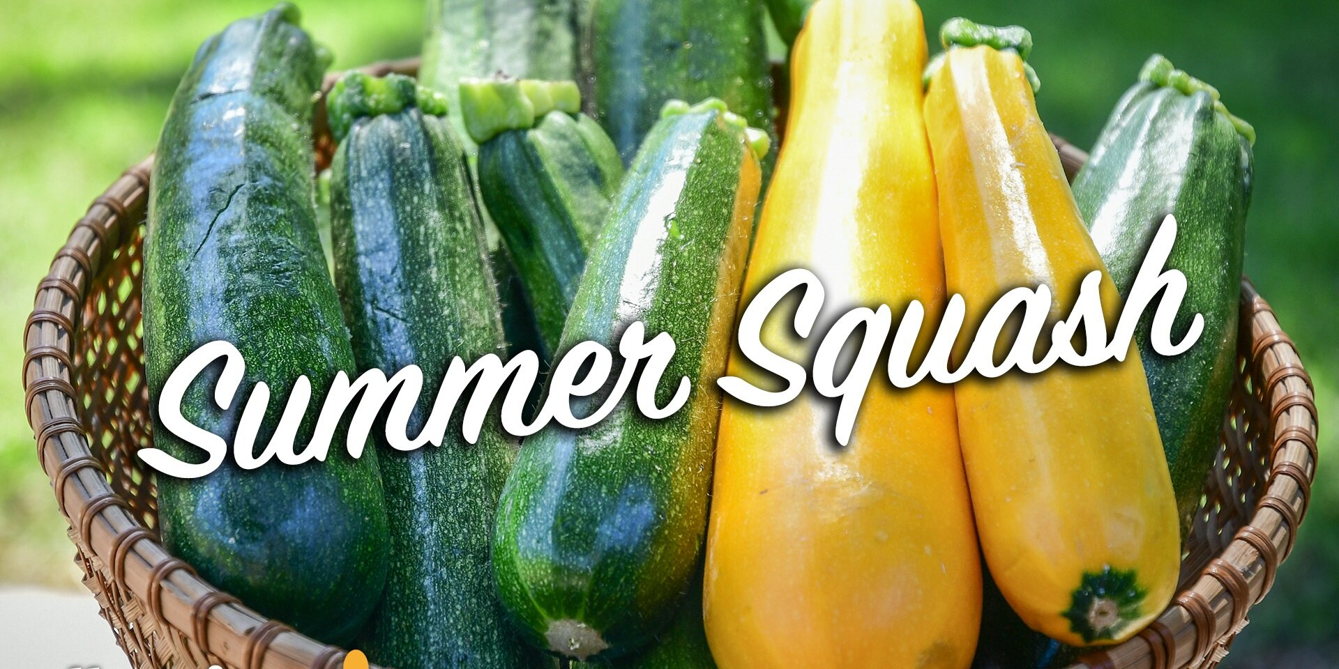 10 types of summer squash and how to cook with them