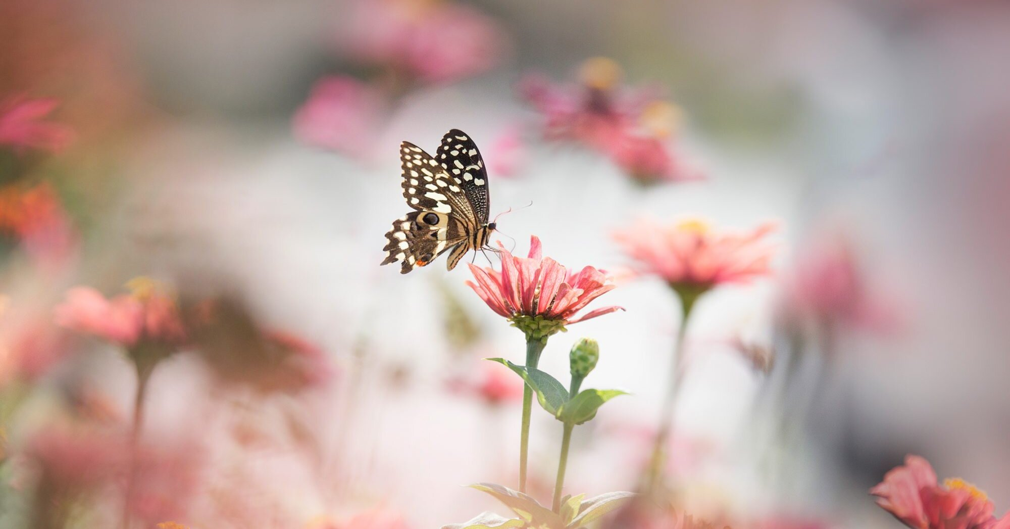 You Can Attract More Butterflies to Your Yard by Planting These Flowers