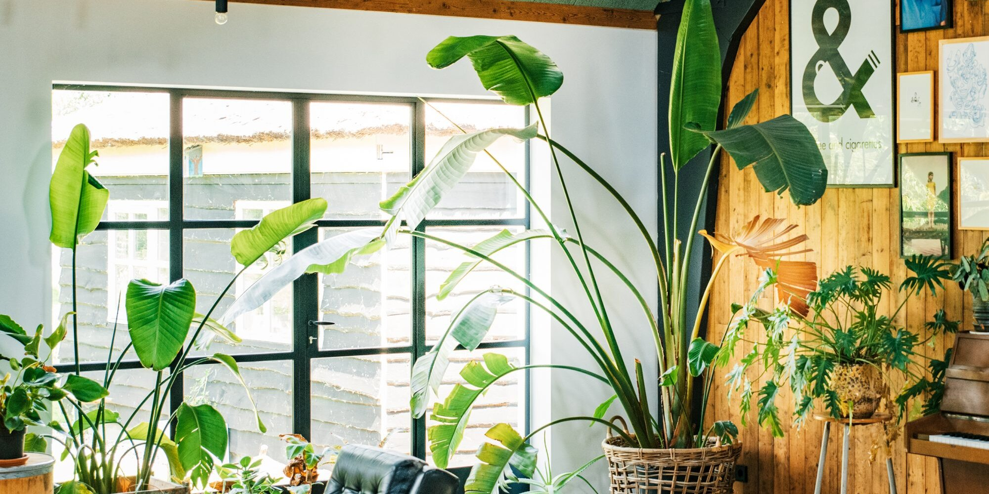 5 Houseplants That Grow Tall and Make a Big Statement