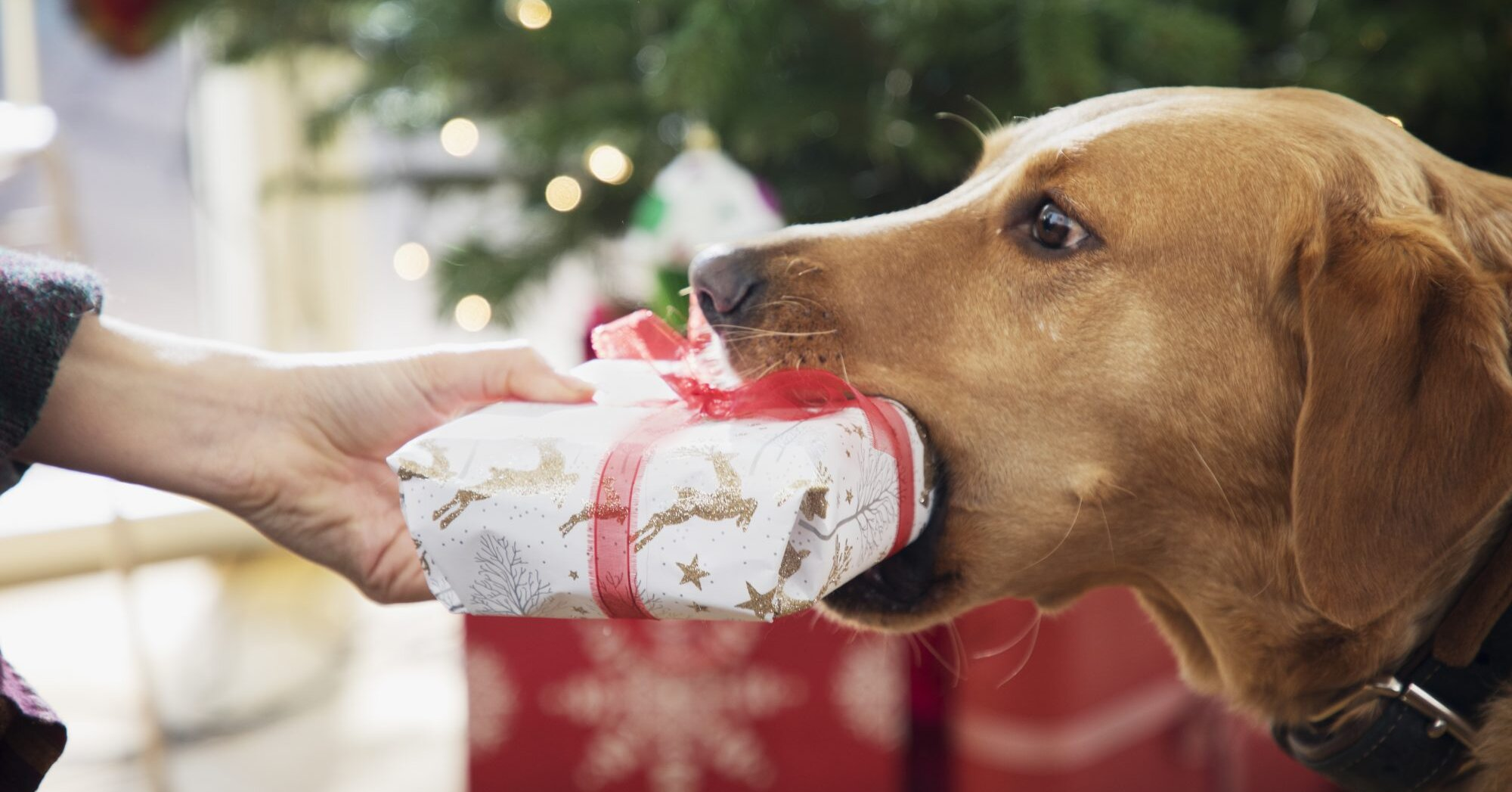 The 7 Best Gifts to Get for Your Pet