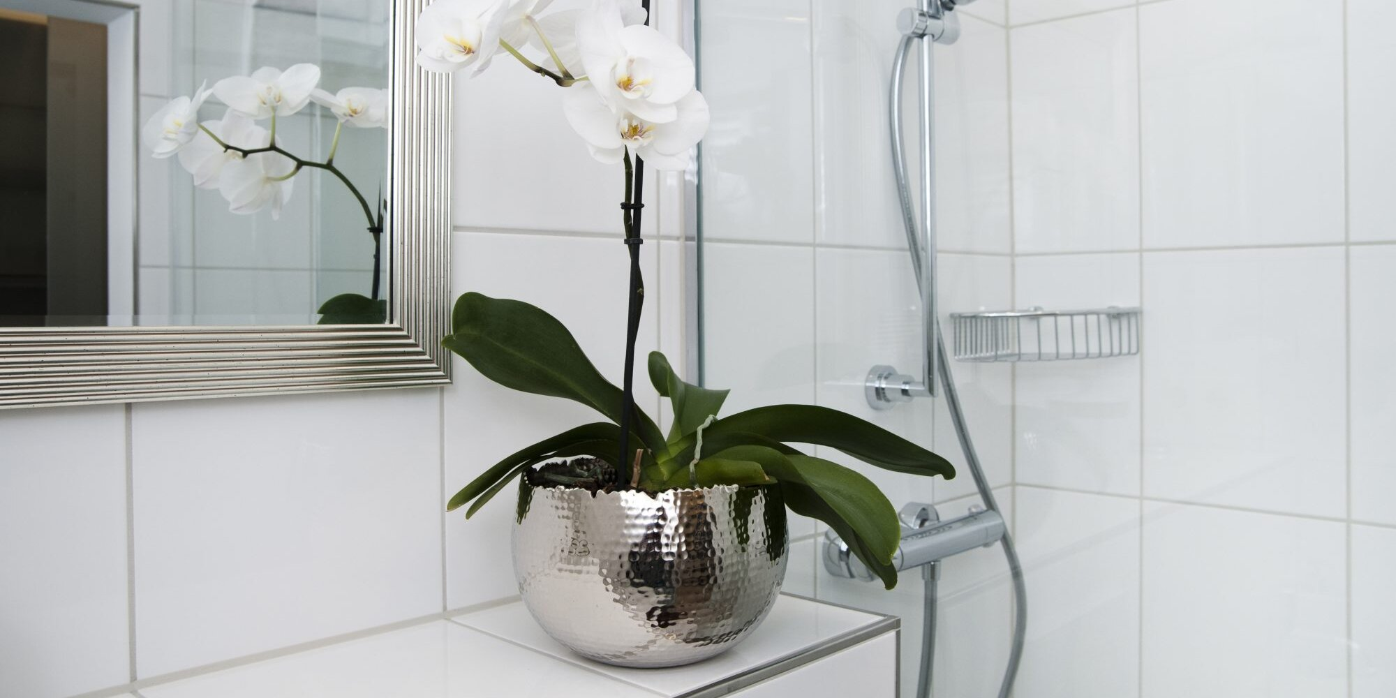 7 Shower Plants to Turn Your Bathroom Into an Oasis