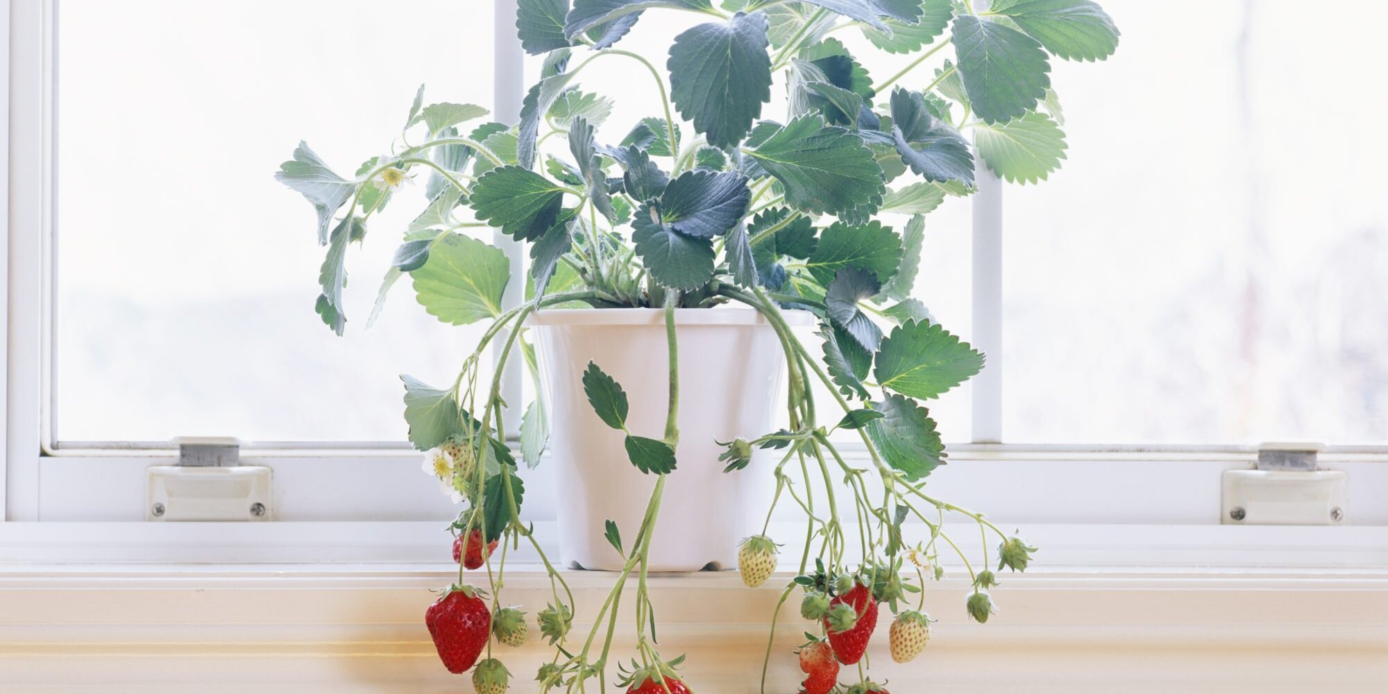 10 Fruits and Vegetables You Can Grow Indoors