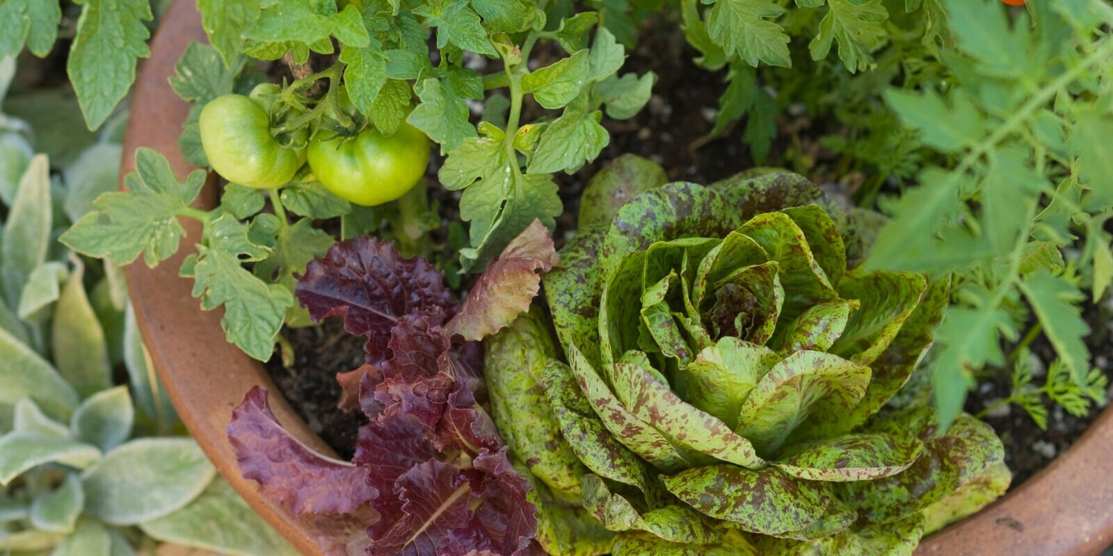 the 14 easiest vegetables fruits and herbs any new gardener