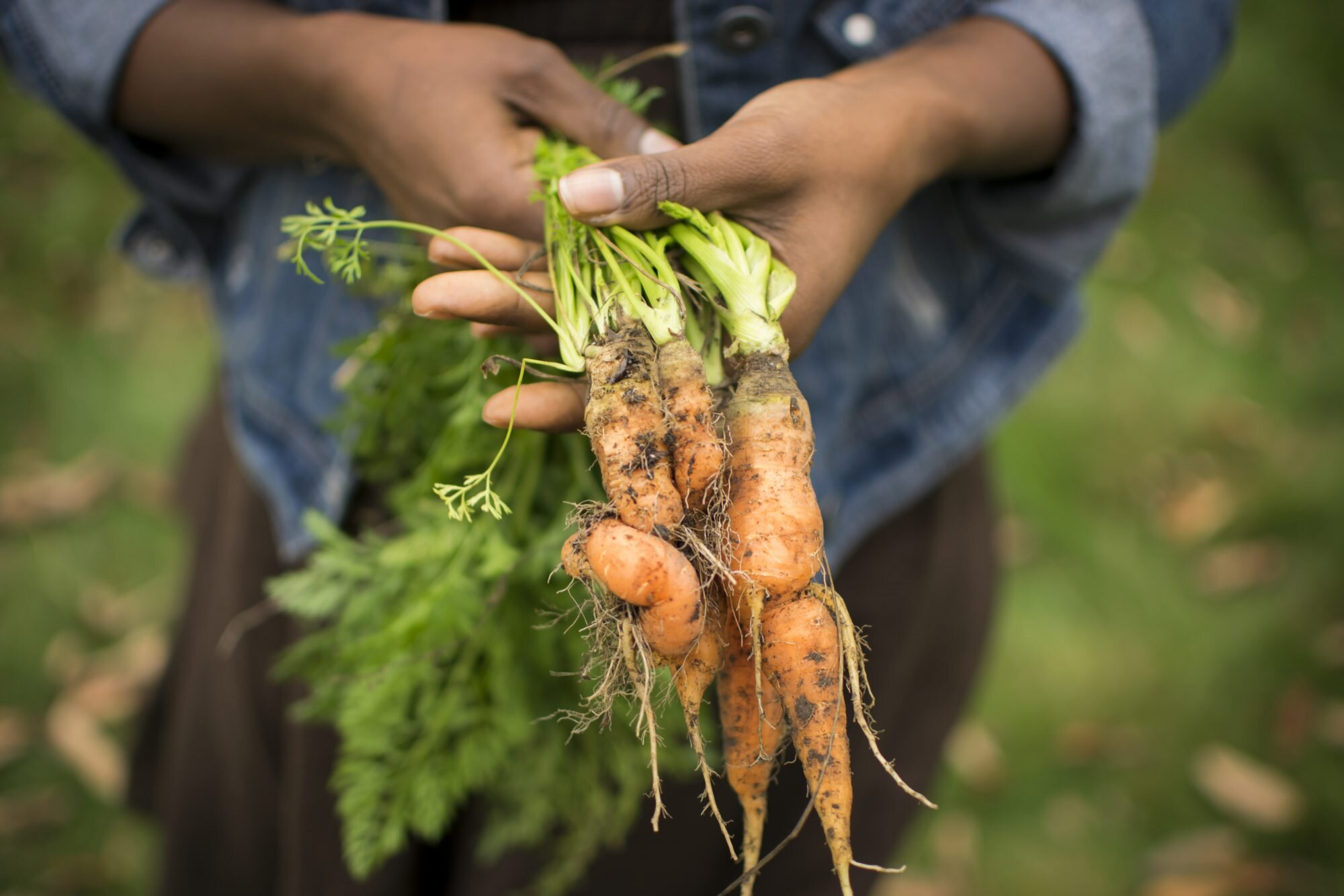 5 Organizations That Support Black Farmers and Food Justice