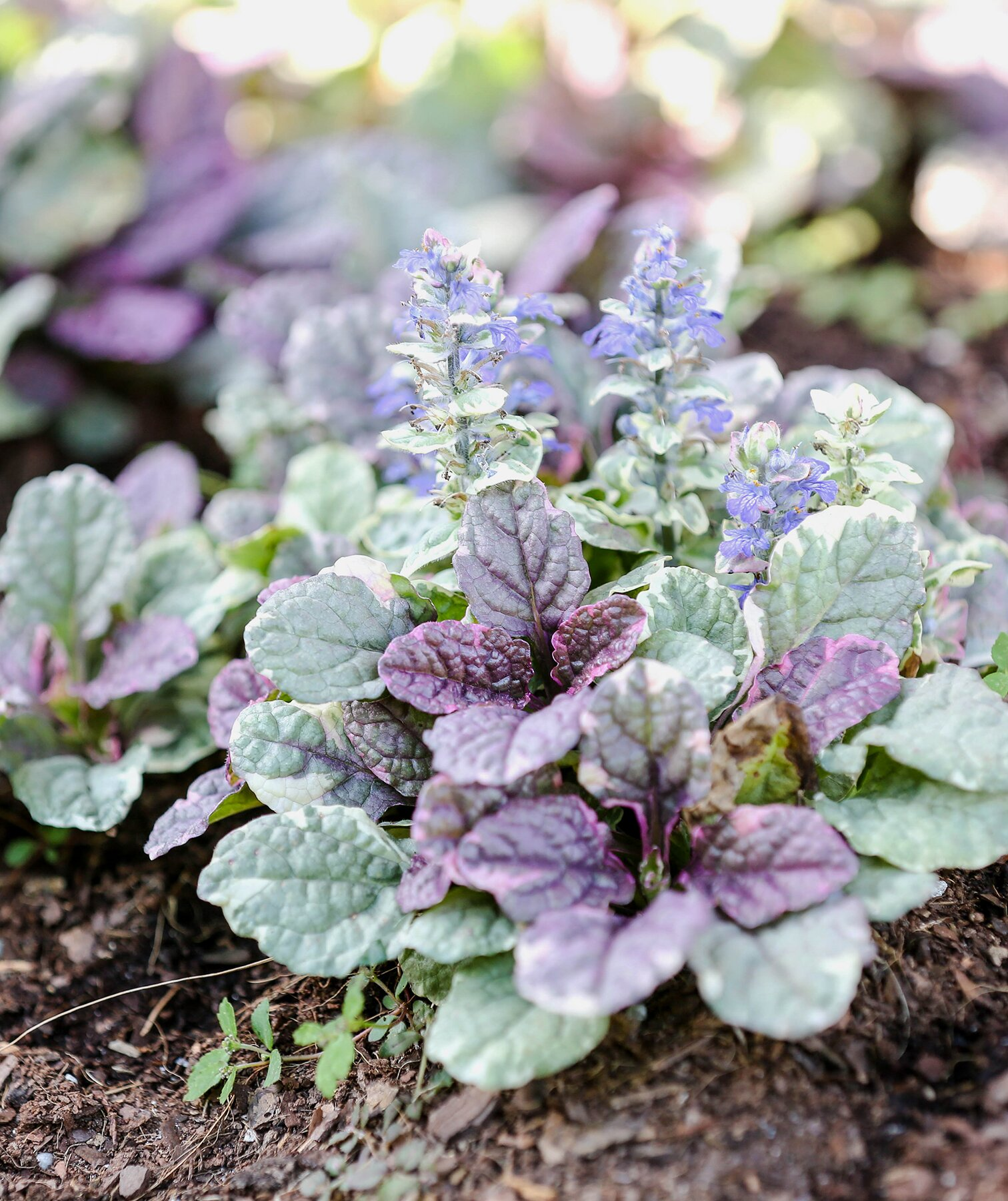 15 Impossible To Kill Outdoor Plants
