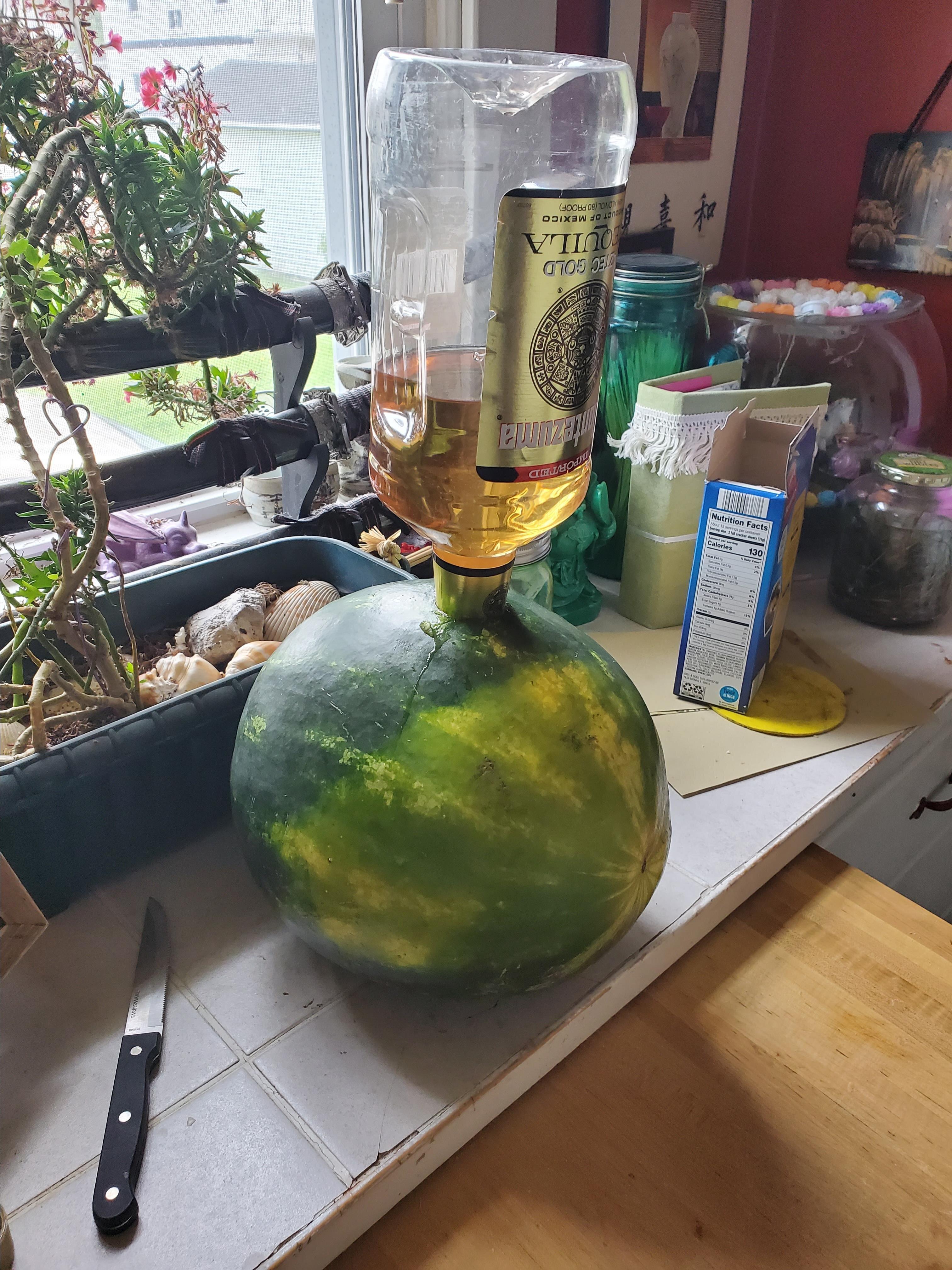 adult watermelon for bbqs recipe