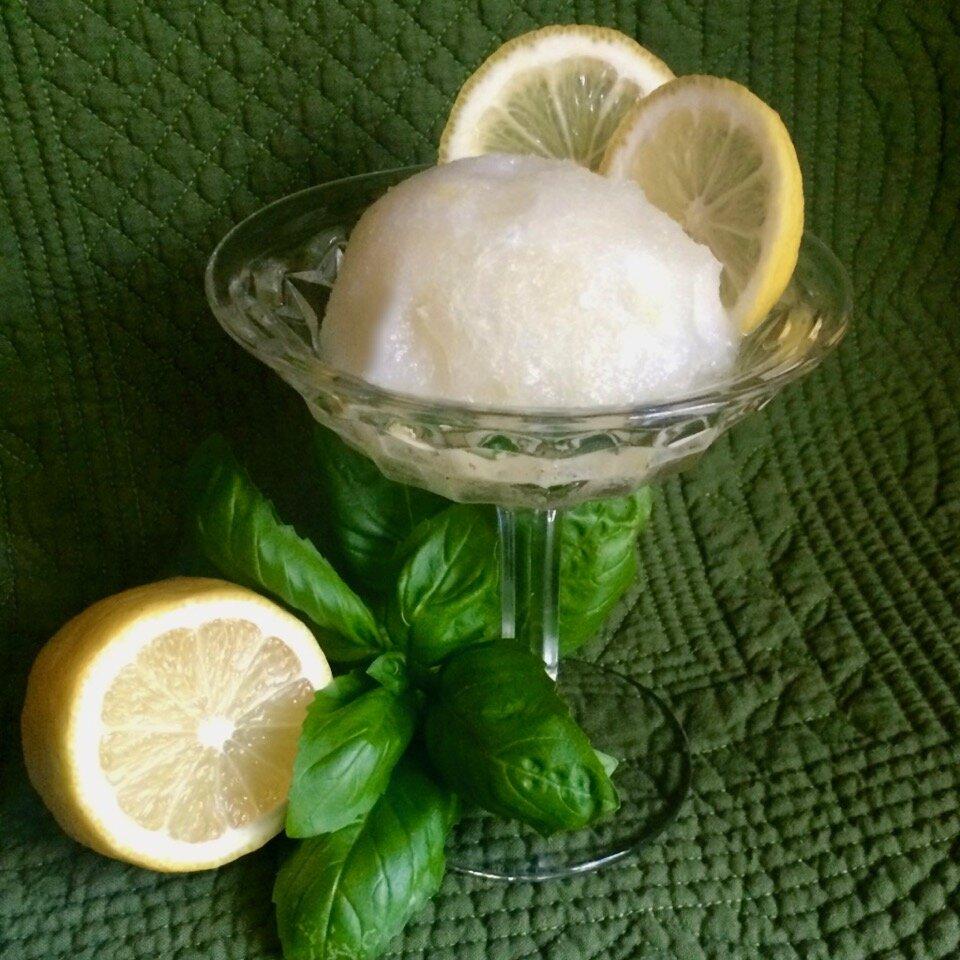 no churn lemon basil sorbet