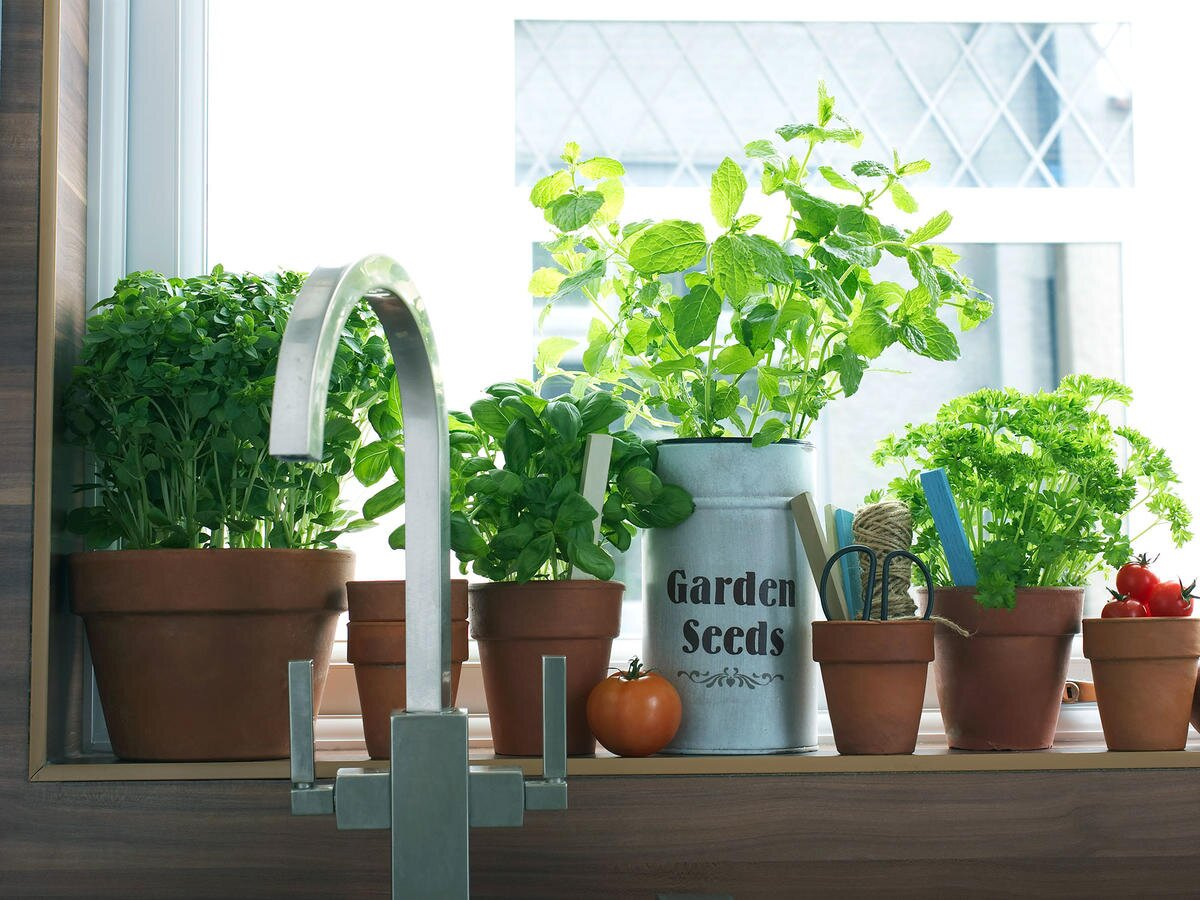11 Herbs Every Cook Should Use
