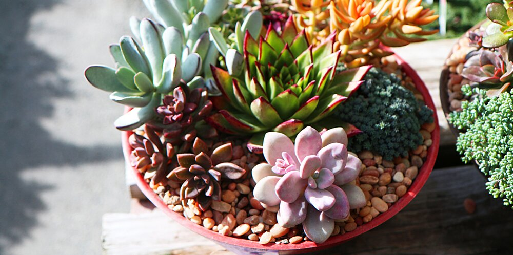 How to Make Succulent Container Gardens   Midwest Living