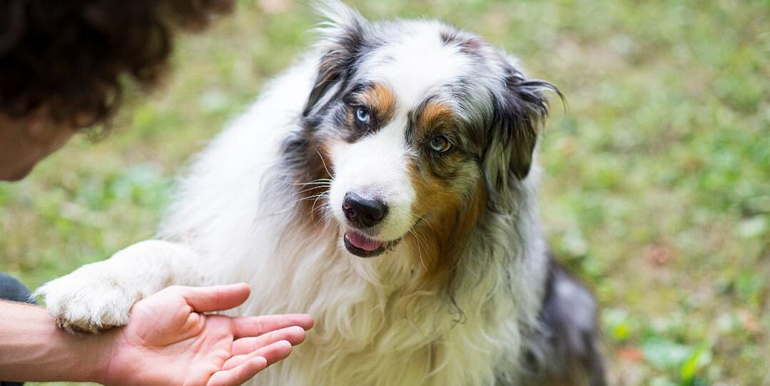 Does Your Dog Put His Paw on You? This Is What He's Trying to Tell You