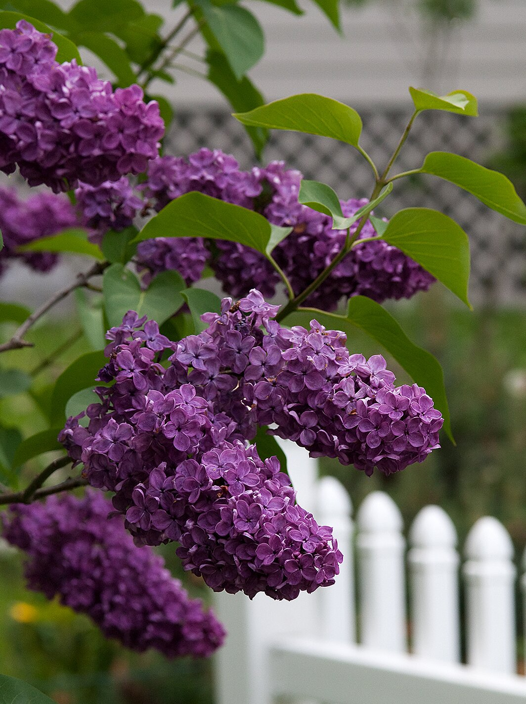 Flowering Shrubs By Season Better Homes Gardens