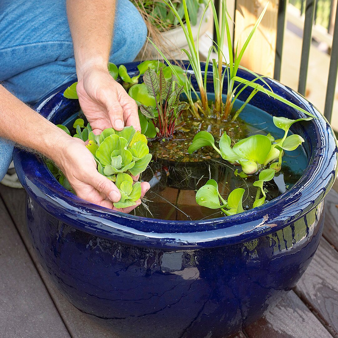 Caring Your Container Water Garden
