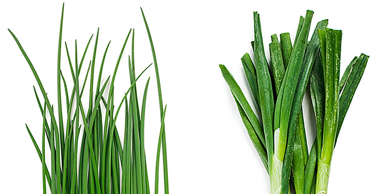 Chives vs. Green Onions