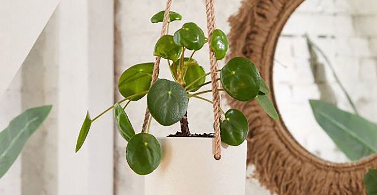 Running Out of Room for Plants? These Wall Planters Are Your Small-Space Solution