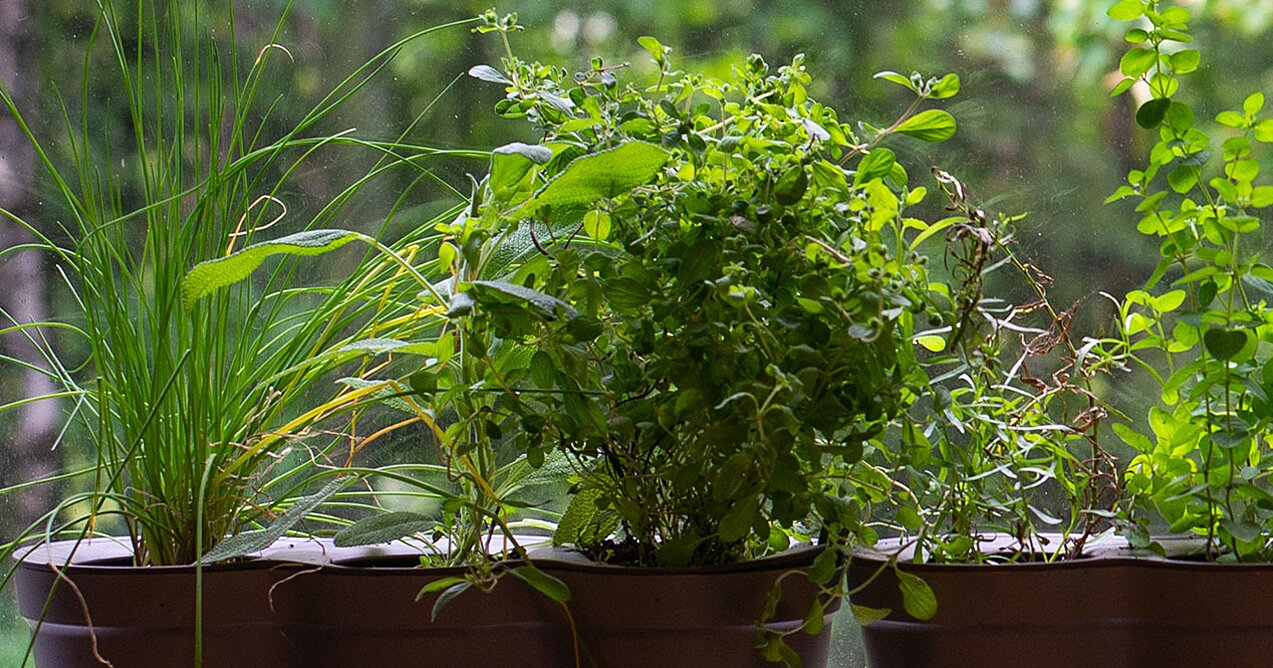 Why You Should Grow Your Own Herbs