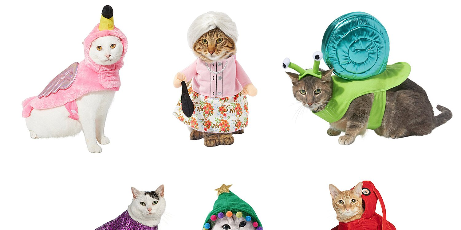 25 Halloween Costumes for Cats that Will Make Your Feline Look Scary Cute