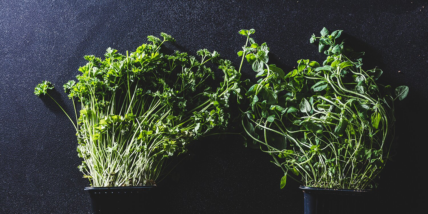 These Indoor Gardens for Growing Fresh Veggies Are on Sale