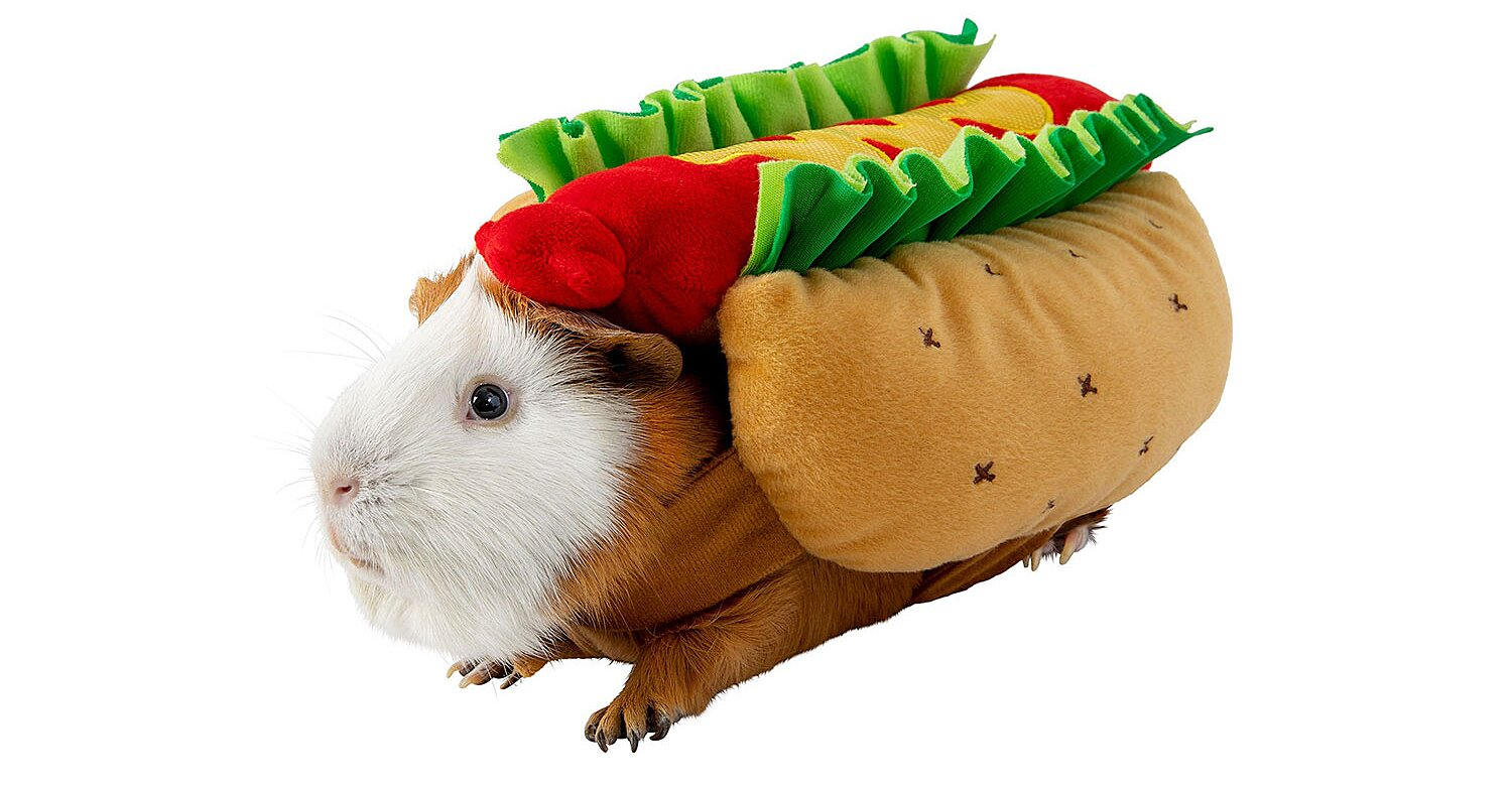 No Tricks Here! These Guinea Pig Halloween Costumes Are All Tiny Treats