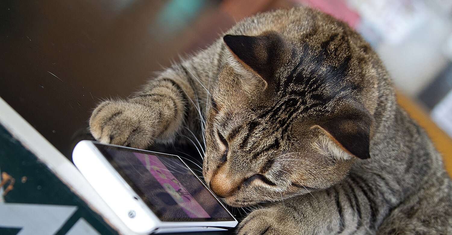 Former Amazon Engineer Creates App to Translate Cat Meows into Words Humans Understand