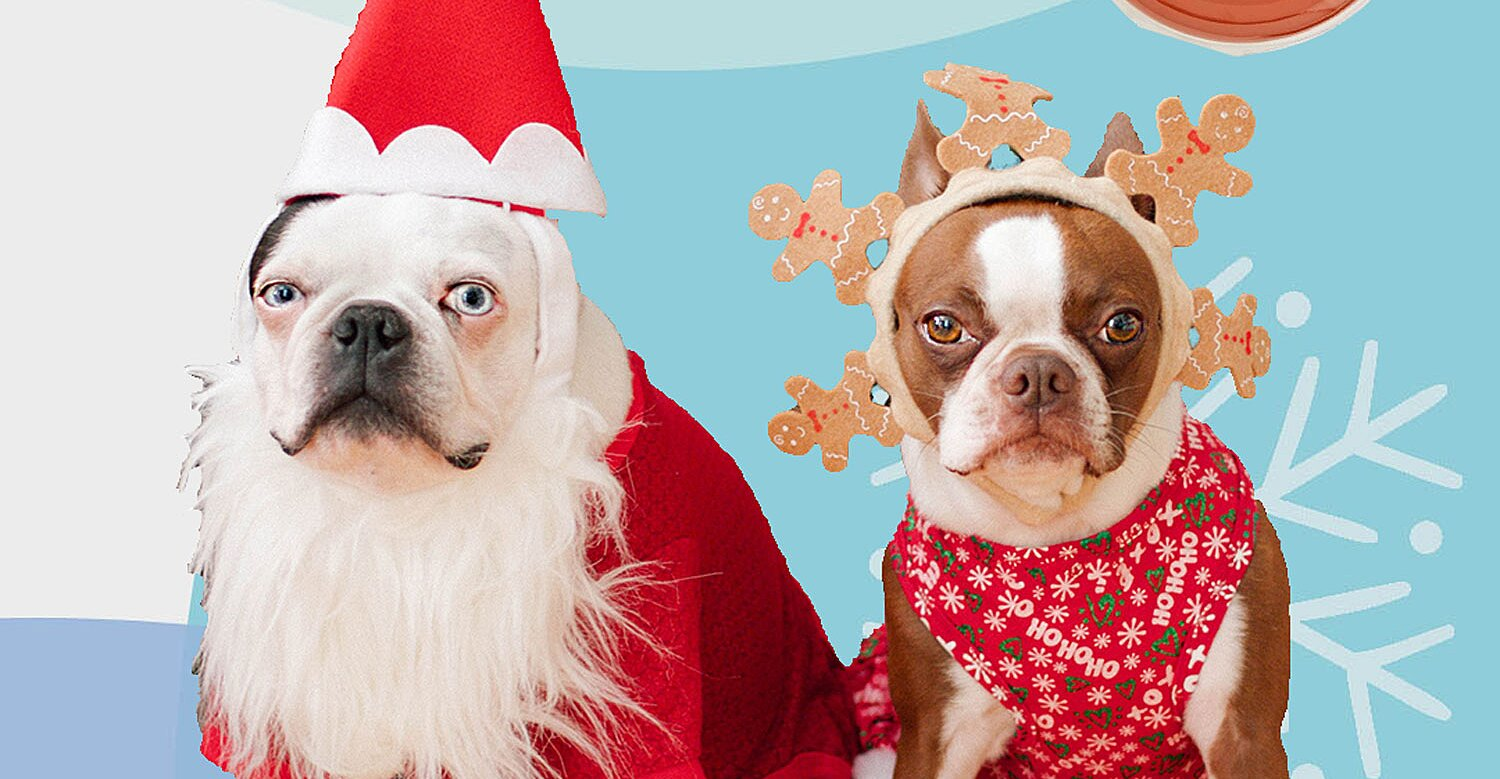 10 Best Holiday Gifts for Pets, Because They're Part of Your Quaran-team Too