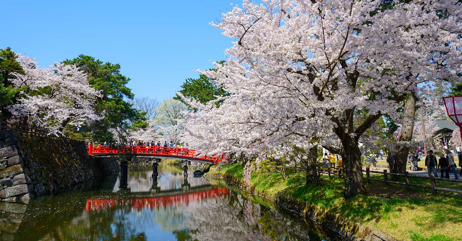 Dying to Visit Japan During Cherry Blossom Season? Go the Unexpected Route by Doing So on a Cruise