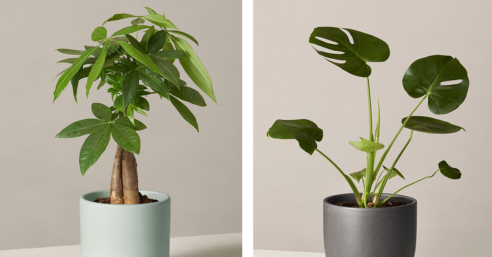 These Easy Houseplants Will Brighten Up Your Space — and You Can Order Them All Online