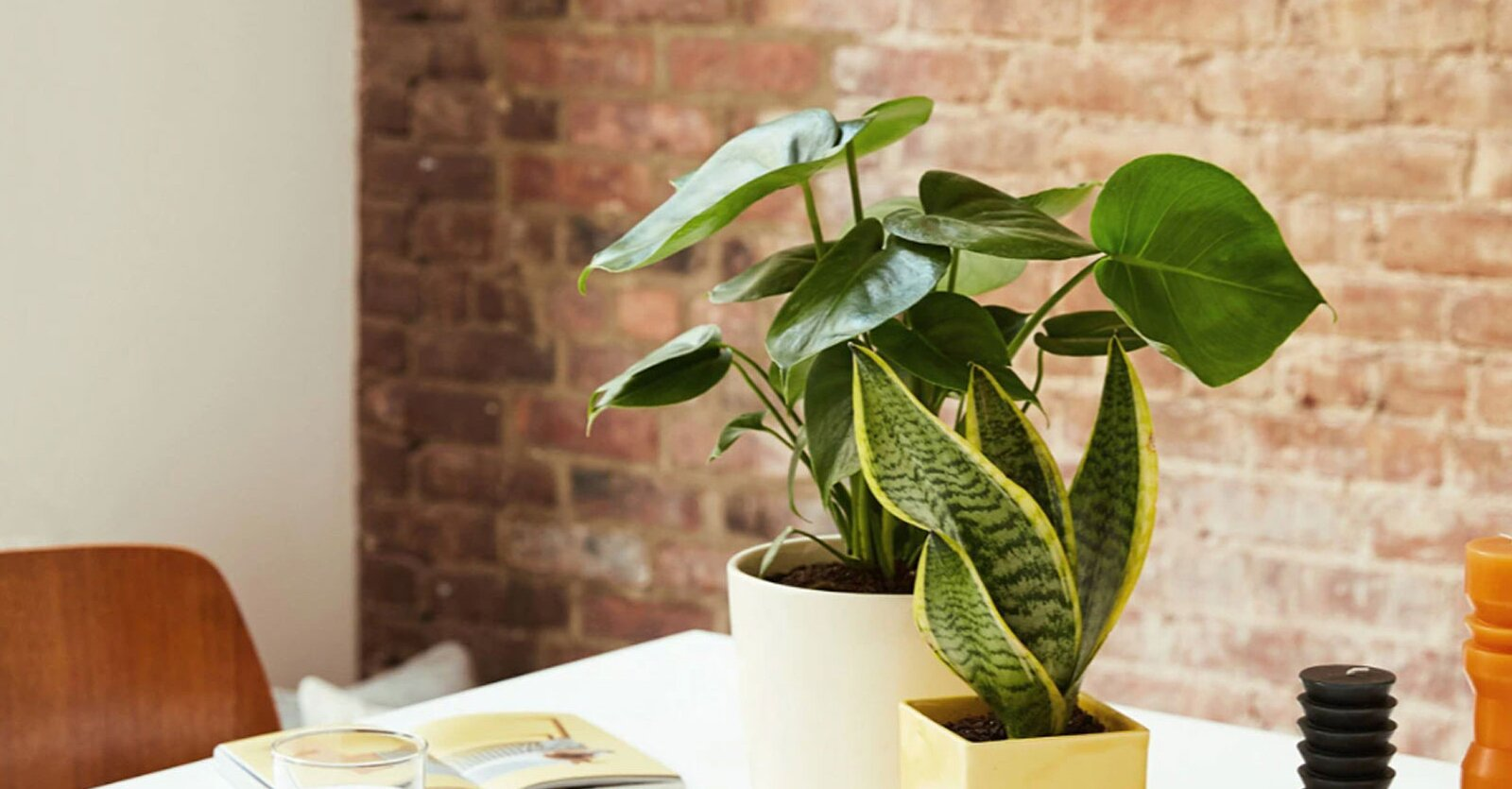 16 Indoor Plants to Liven Up Your Kitchen Space