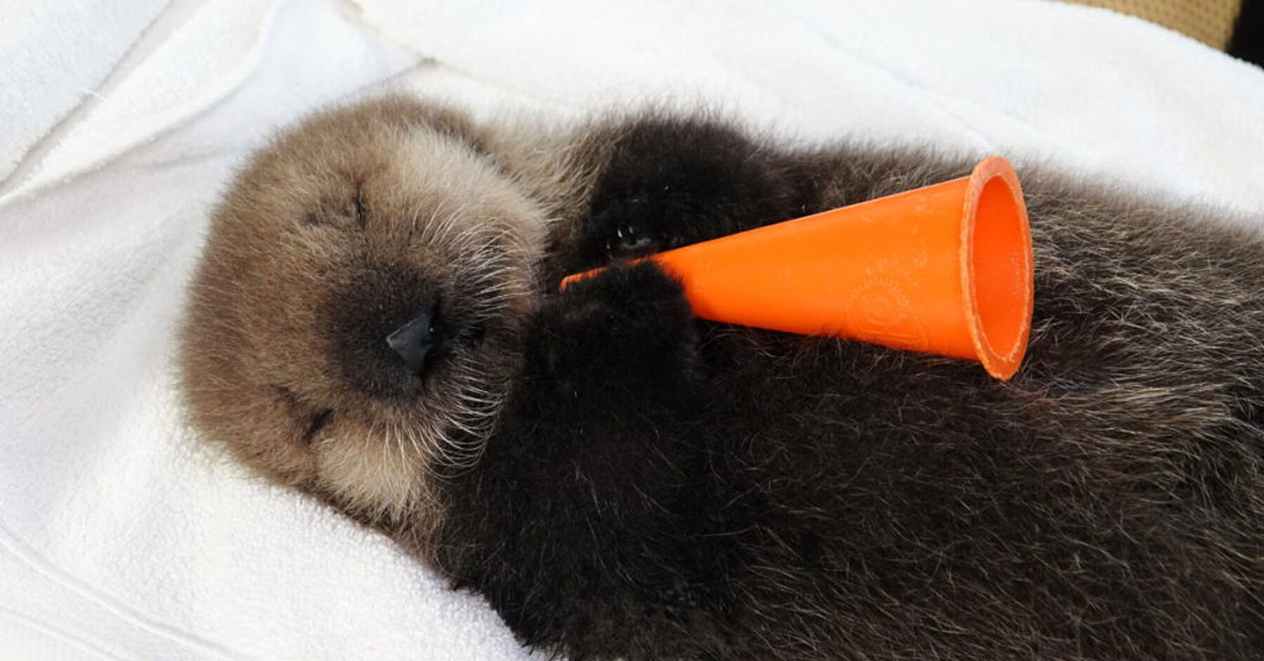 This Sleepy Baby Sea Otter Livestream Is the Sweetest Thing You'll See All Week