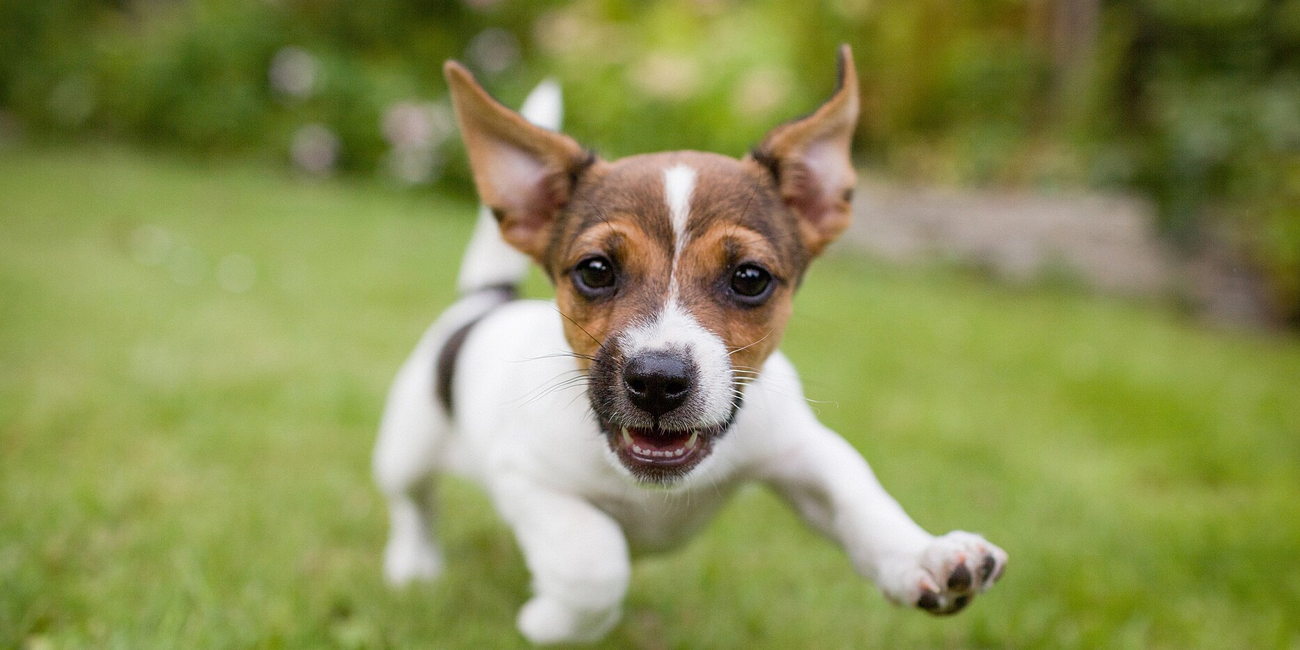 Does Your Dog Get the 'Zoomies'? Here's What's Really Going On