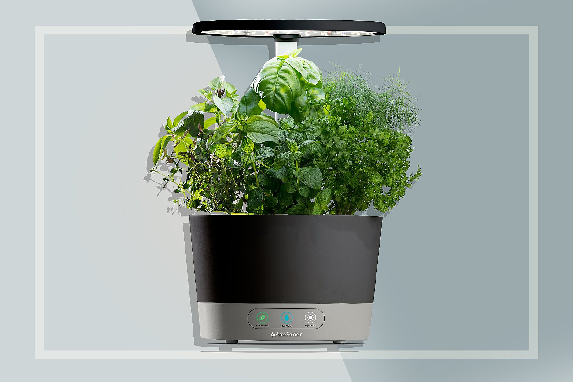 Grow Lettuce, Herbs, and More on Your Countertop With This Space-Saving  Garden