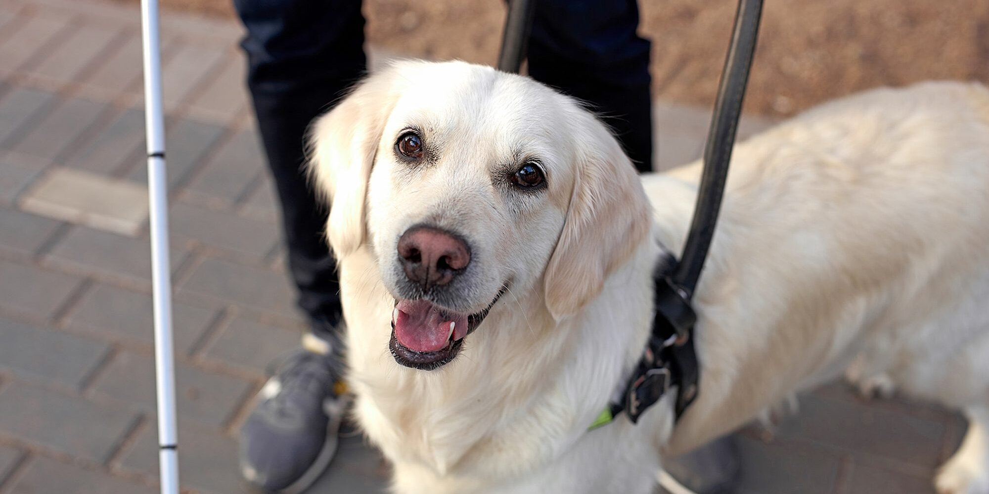 Here's Why It's Not OK to Pet Service Dogs — and What You Should Do Instead
