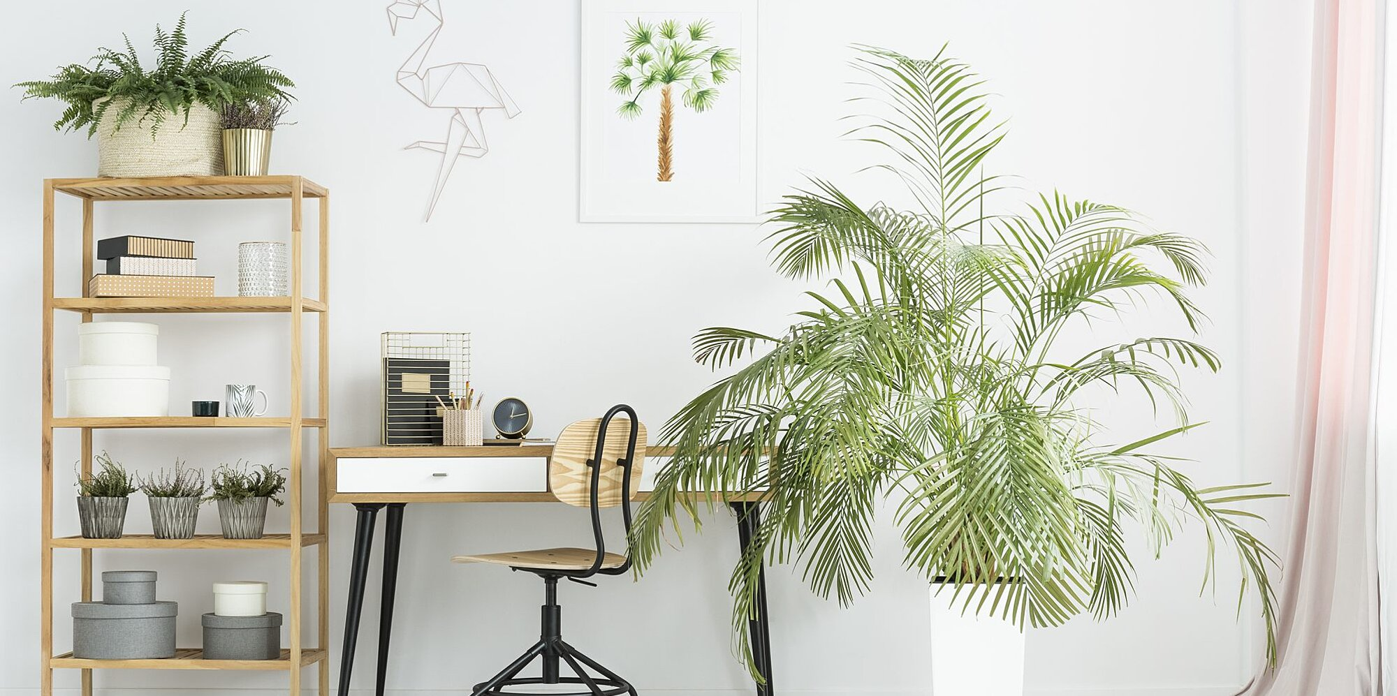 10 Types of Palm Trees You Can Grow Indoors