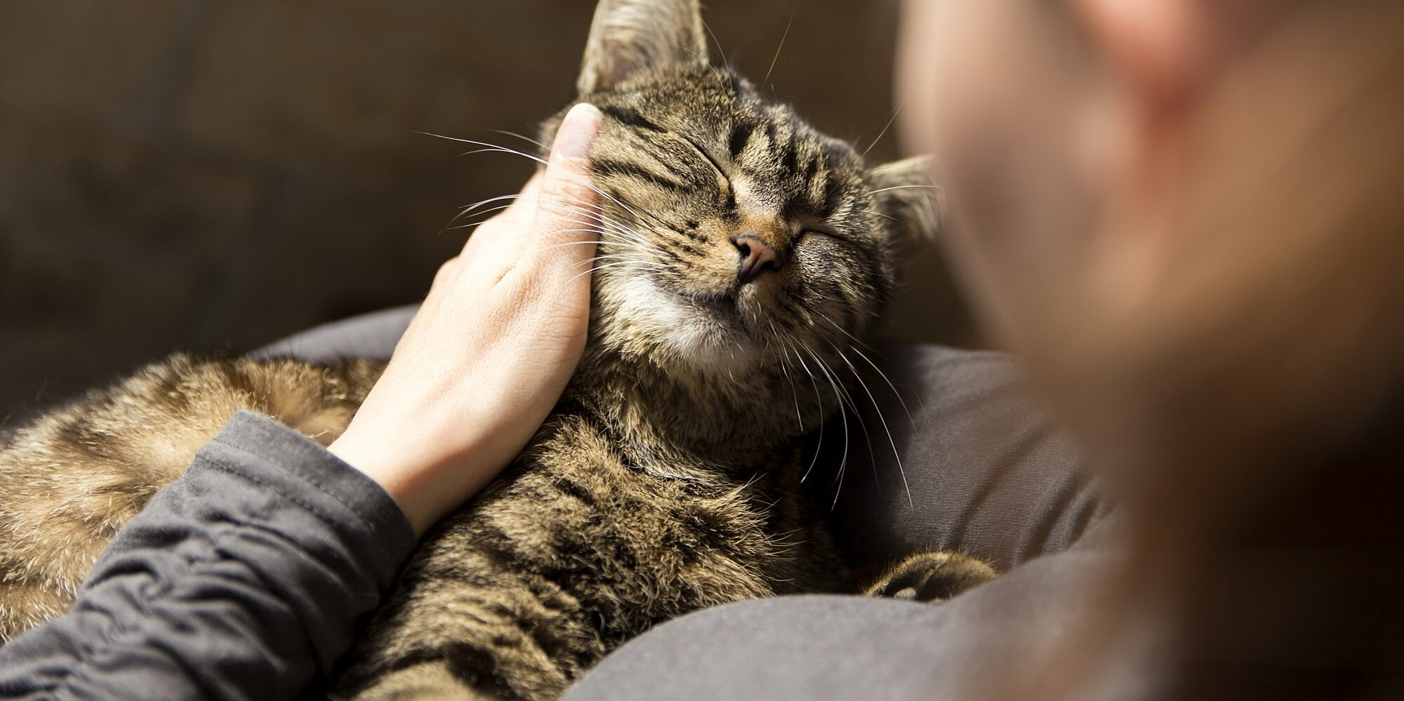 Does Your Cat Love You? Here's How You Can Tell, According to Experts