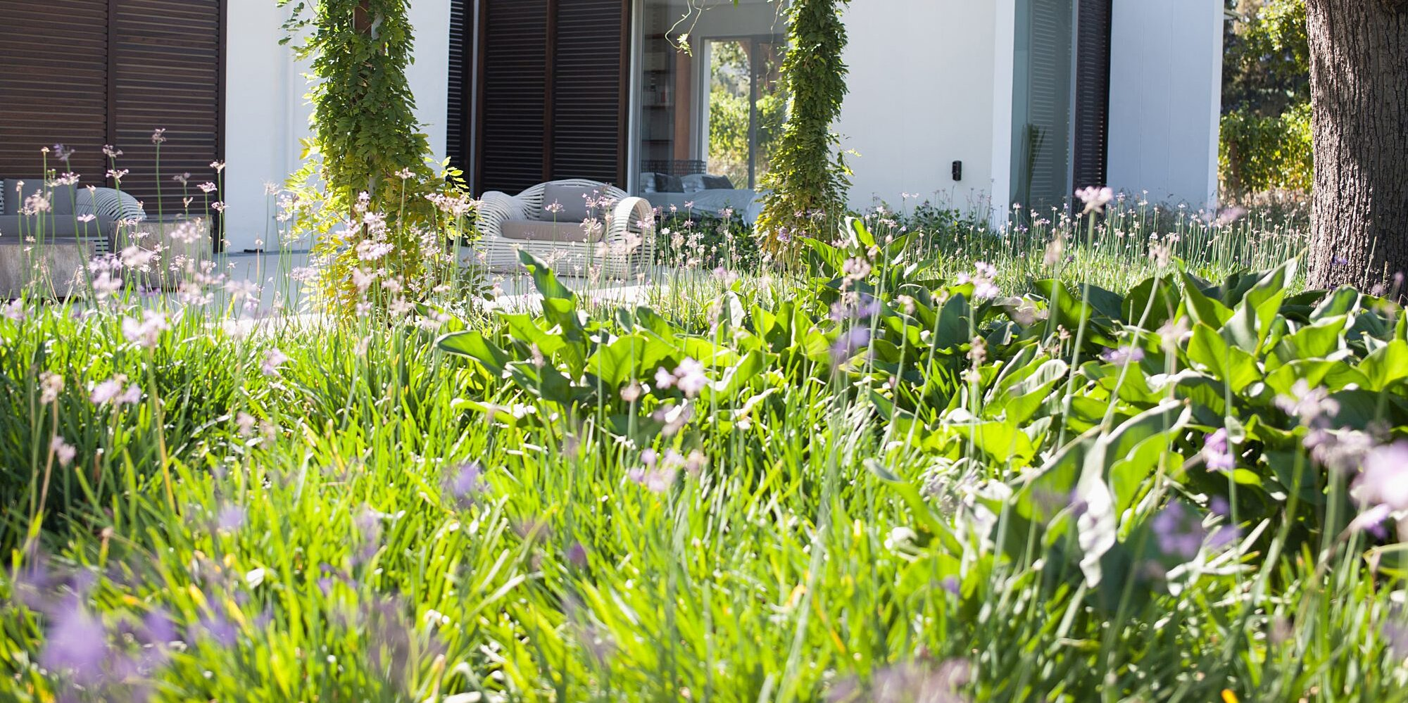 Eight Alternatives to a Traditional Grass Lawn
