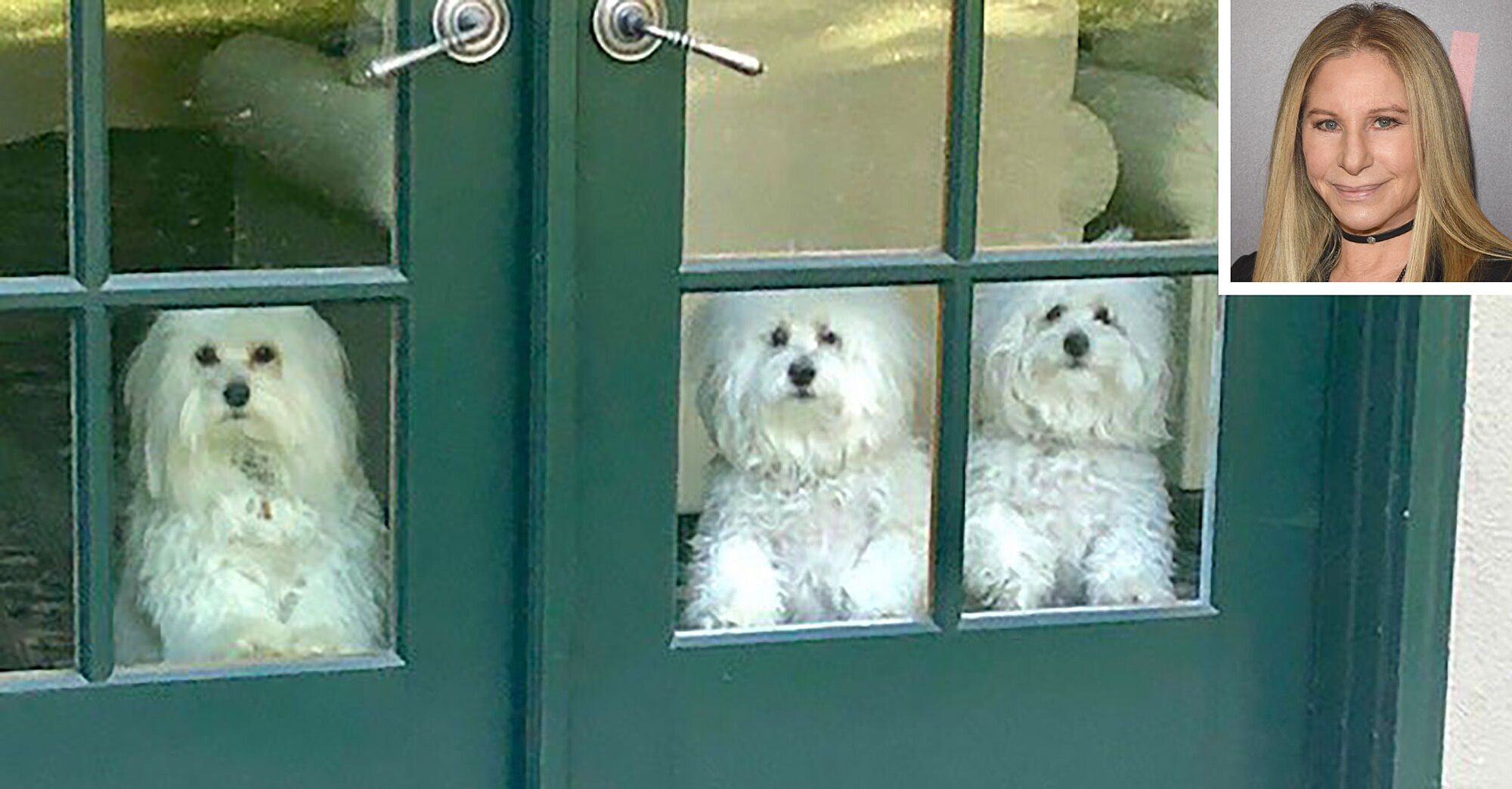 Barbra Streisand Posts Photo Of Dogs After California Fires People Com,How To Update Maple Kitchen Cabinets Without Painting
