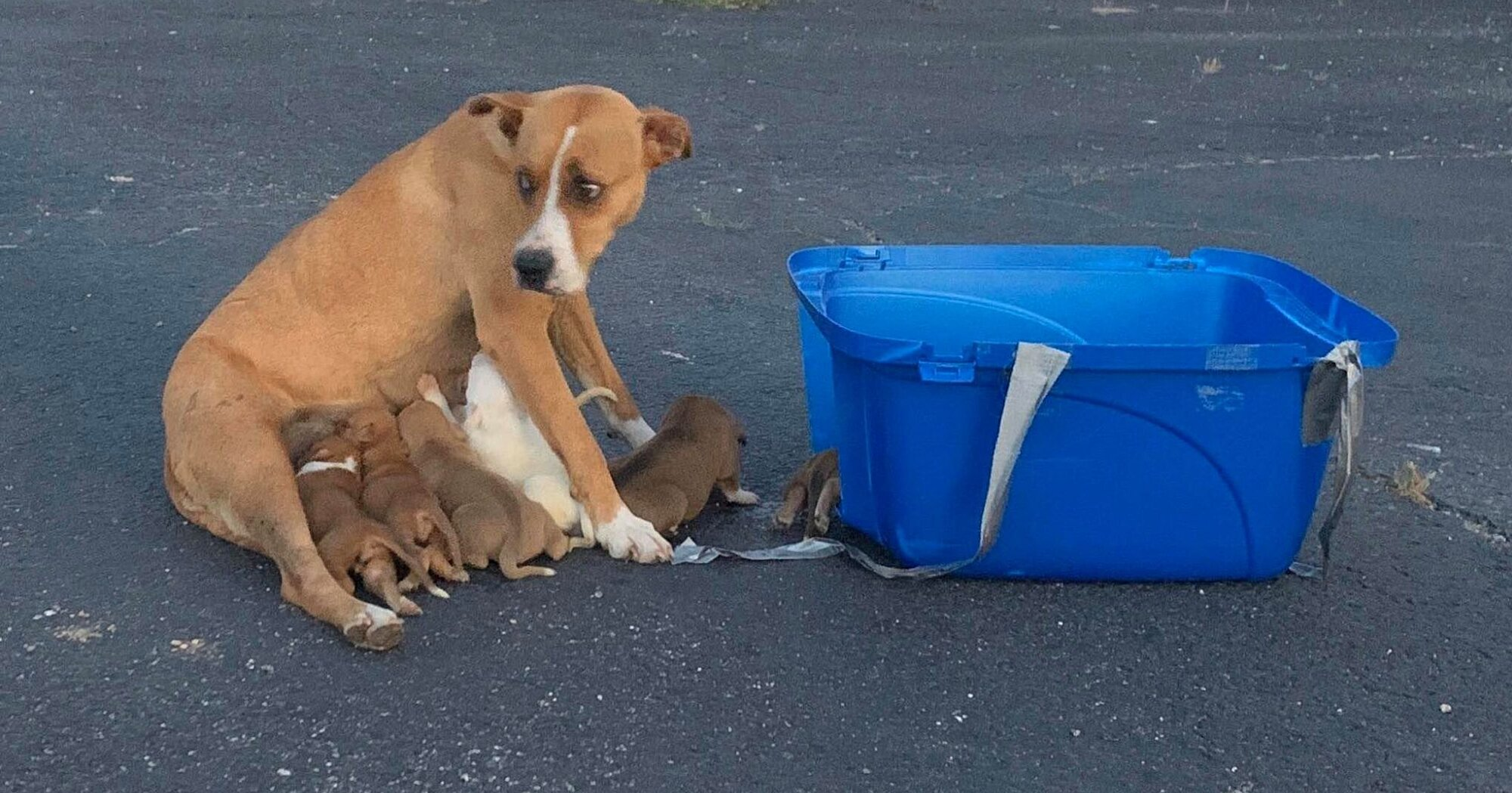 Texas Rescue Group Saves Dog and Her 9 Puppies After They Were Dumped in a Church Parking Lot