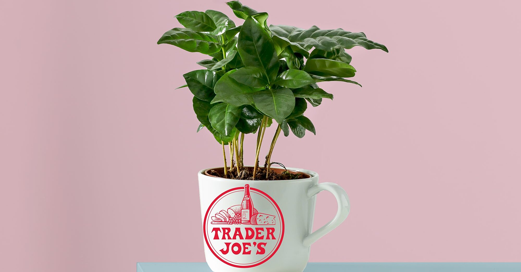 Trader Joe's Is Selling Coffee Plants—Here's What to Do With Them