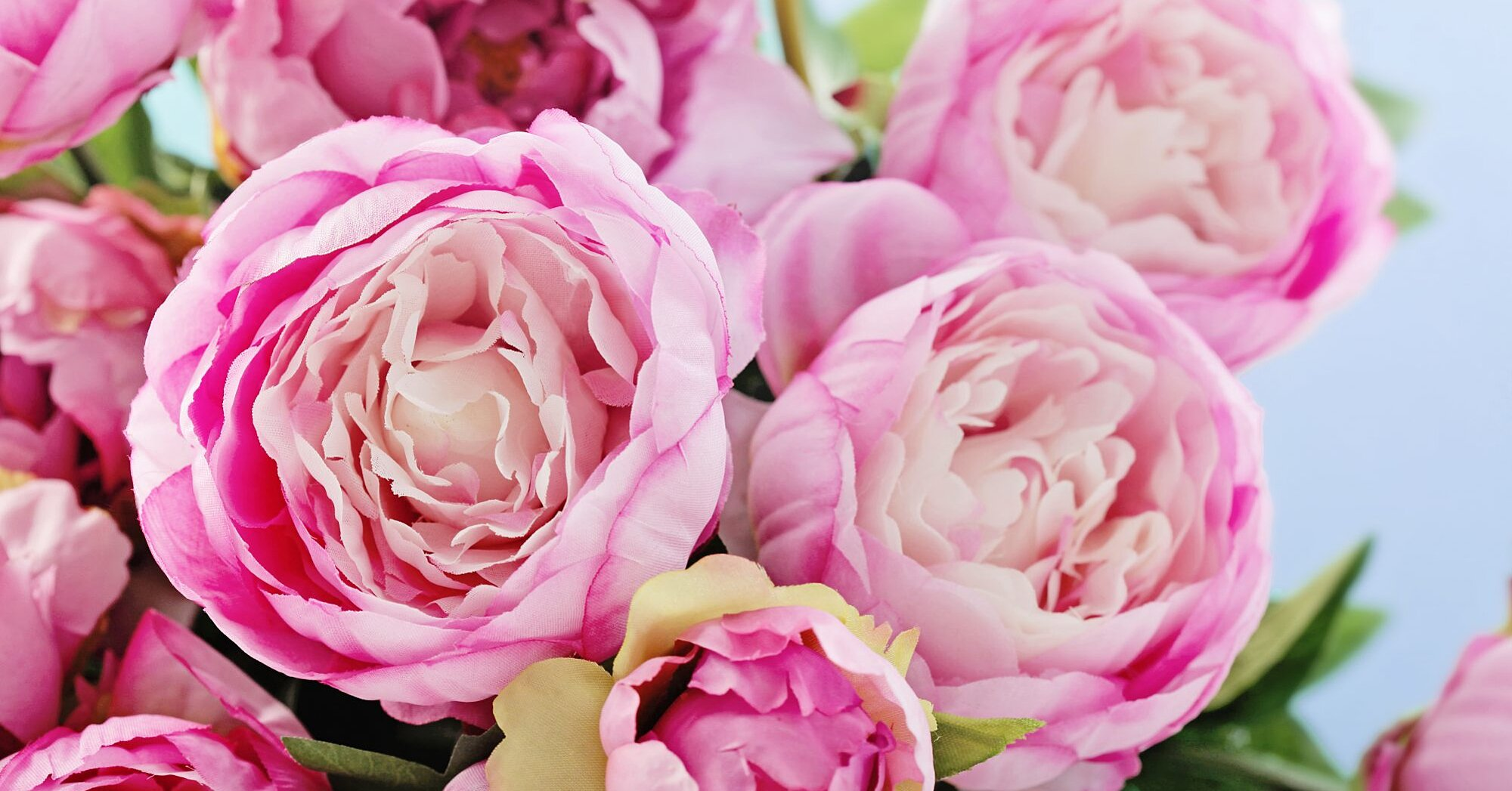 Watch 12 Surprising Facts All Peony Enthusiasts Should Know