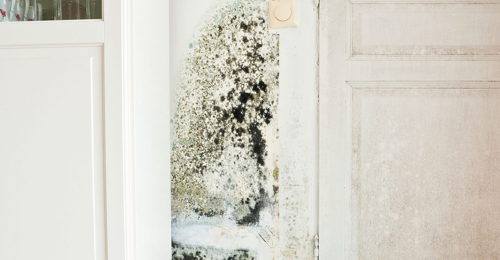 What to Do If You Find Black Mold in Your Home