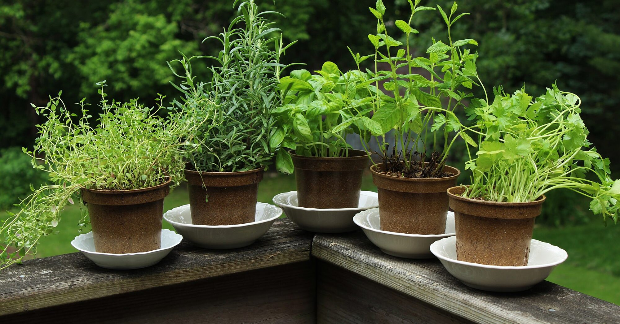 6 Easy-to-Grow Herbs That Help Your Immune System