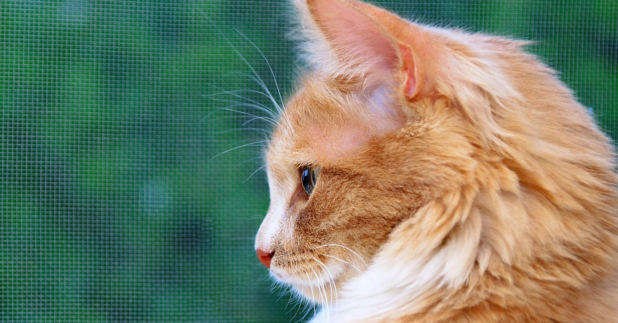 150 Best Names for Your Orange Cat