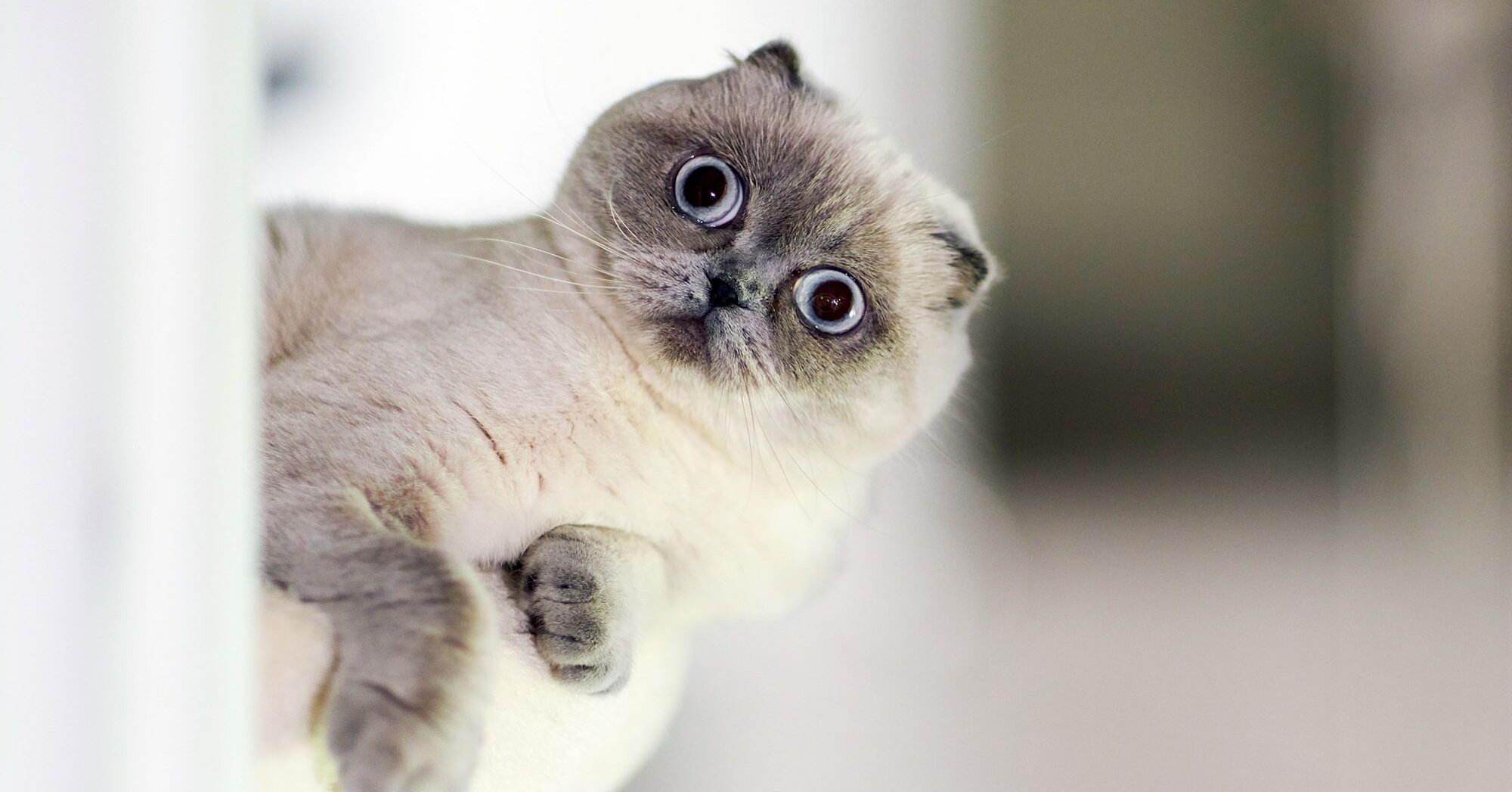 150+ Funny Cat Names Perfect for a Pet with Personality