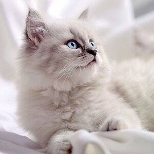 Black And White Cat Names 145 Creative Name Ideas Daily Paws