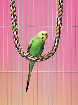 4 Ideas For Low Maintenance Pets Real Simple