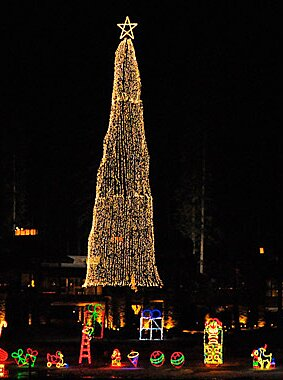 Tallest Christmas Tree In Usa 2020 America's Tallest Christmas Trees | Travel + Leisure