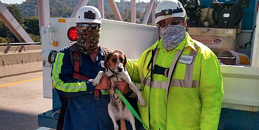 Again? Second Hound Found Stranded on a High, Unsecure Bridge