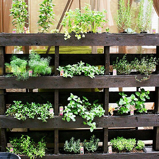 Growing Cilantro For The Freshest Flavor Better Homes Gardens