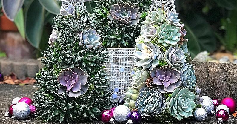 The Latest Holiday Trend to Go Viral: Succulent Christmas Trees